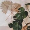 Natural Sun palm stems